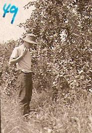 Dodge S Cider Mill Rowley Ma